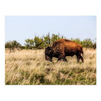 Buffel Vykort