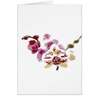 Bukett för PhalaenopsisOrchidblomma Hälsningskort