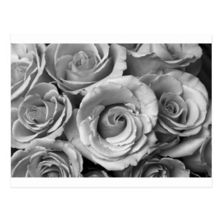 Bukett med rosor i svartvitt vykort