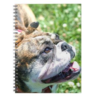 Bulldogg Anteckningsbok