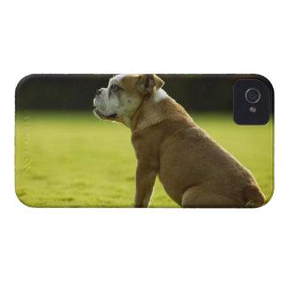 Bulldogg i fält Case-Mate iPhone 4 skydd