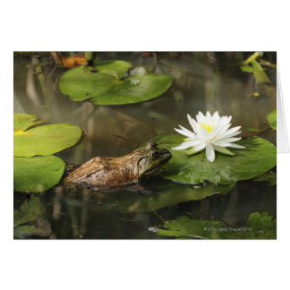Bullfrog i liljadamm hälsningskort