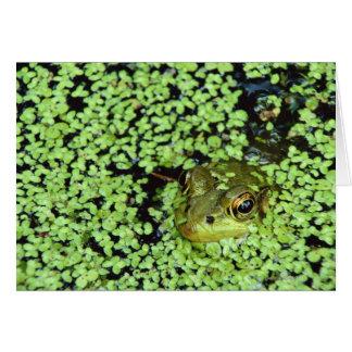 Bullfrog (Pyxicephalus adspersus) i duckweed Hälsningskort