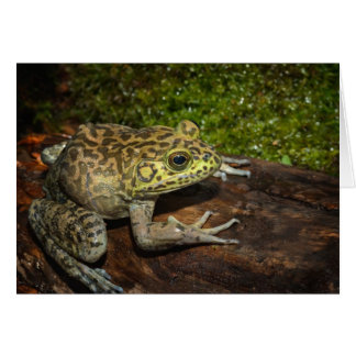 Bullfrog Ranacatesbeiana Hälsningskort