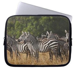 Burchells zebror (equusen Burchellii) som sett in Laptopfodral