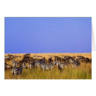 Burchells zebror och Wildebeest i högväxt Hälsningskort