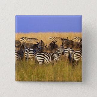 Burchells zebror och Wildebeest i högväxt sommar Standard Kanpp Fyrkantig 5.1 Cm