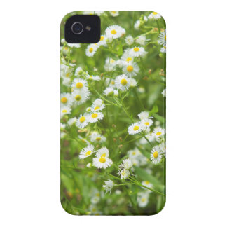Buskecamomileblommor iPhone 4 Case-Mate Cases