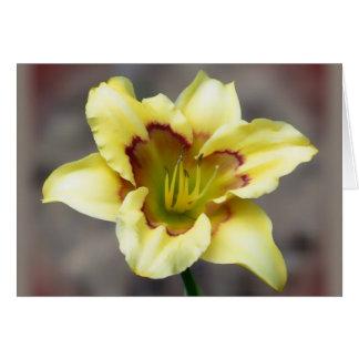 Buttery gult på grått - Daylily Hälsningskort