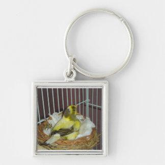 Bygga bo kanariefågeln fyrkantig silverfärgad nyckelring