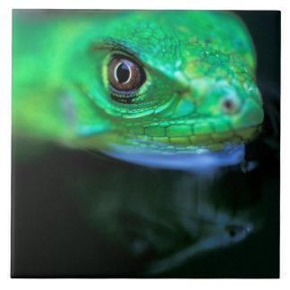 CA Panama, Barro Colorado ö, bebisgrönt Kakelplatta