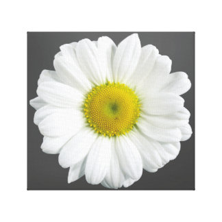 Camomile Canvastryck