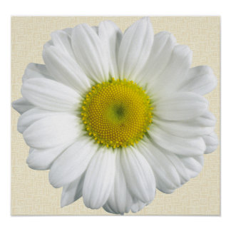 Camomile Poster