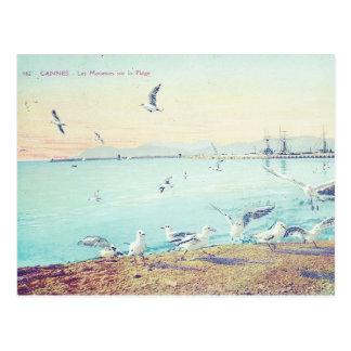 Cannes strandfiskmåsar vykort