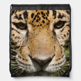 Captive jaguar i djungelbilaga gympapåse
