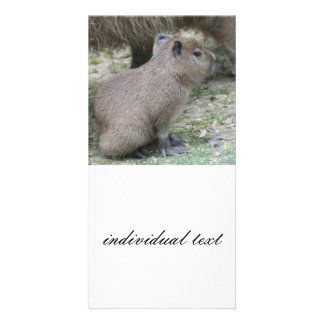 capybarabebis anpassingsbara fotokort