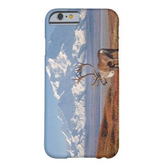 caribou Rangifertarandus, tjur i höst färger Barely There iPhone 6 Fodral