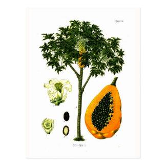 Carica papaya (papayaen) vykort