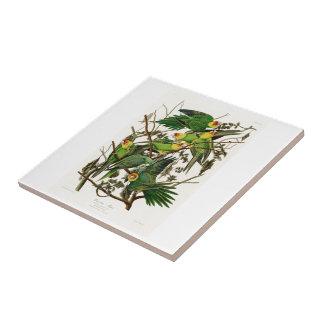 Carolina papegojaJohn Audubon fåglar av Amerika Liten Kakelplatta