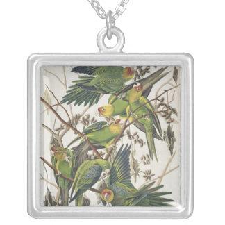 """Carolina parakiter, från """"fåglar av Amerika"""", 1829 Silverpläterat Halsband"""