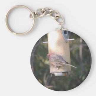 Cassins Finch på en fågelförlagematare Rund Nyckelring