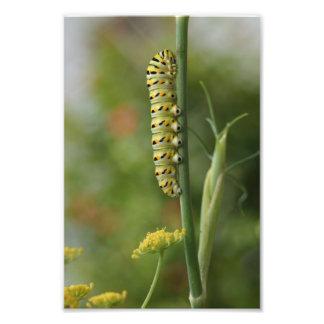 Caterpillar fotografi upp den nära naturen fotogra