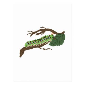 Caterpillar Vykort