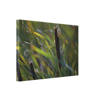 Cattails i dekor för vägg för briskanfassjal canvastryck