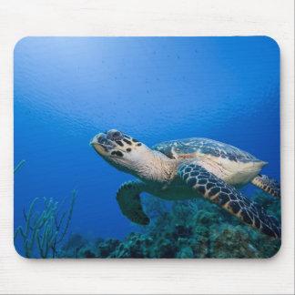 Cayman Islands lite Caymanö, undervattens- 2 Musmatta