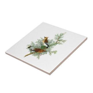 CederträfågelJohn James Audubon fåglar av Amerika Liten Kakelplatta
