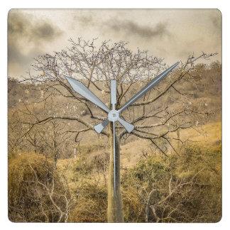 Ceibaträd på det torra skogGuayas området - Fyrkantig Klocka
