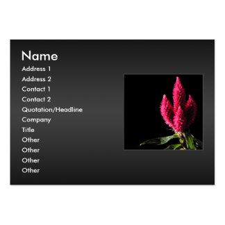 Celosia Caracas. Cockscombs. Rosa Flowers. Set Av Breda Visitkort