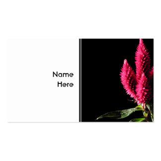 Celosia Caracas. Cockscombs. Rosa Flowers. Visitkort