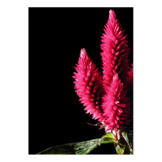Celosia Caracas. Cockscombs. Rosa Flowers. Visit Kort