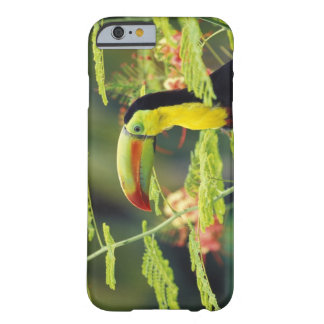 Central America Honduras. Köl-fakturerade Toucan Barely There iPhone 6 Fodral