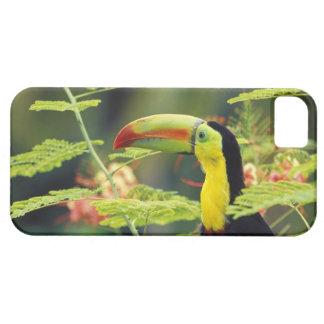 Central America Honduras. Köl-fakturerade Toucan iPhone 5 Fodraler