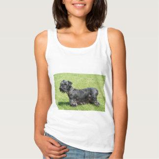 cesky-terrier-fullt 2.png linne