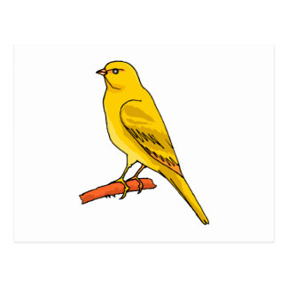 Chaz kanariefågel vykort