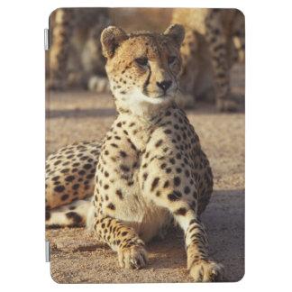 Cheetah (Acinonyx Jubatus), nationella Kruger. iPad Air Skydd