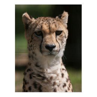 cheetah i djungeln vykort
