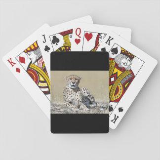 Cheetah Spel Kort