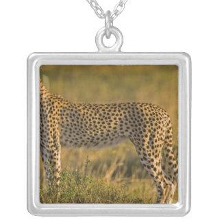CheetahAcinonyxjubatus) på slätten, Masai Silverpläterat Halsband