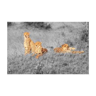 Cheetahfamilj som vilar på en liten backe canvastryck