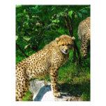 Cheetahkattzooen parkerar det färgrika mönster brevhuvud