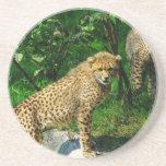 Cheetahkattzooen parkerar det färgrika mönster glasunderlägg