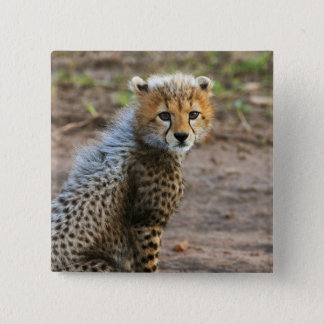 CheetahungeAcinonyx Jubatus) som sett i Standard Kanpp Fyrkantig 5.1 Cm
