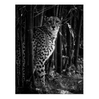 Cheetahvykort Vykort