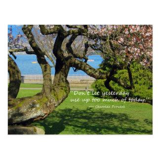 Cherokee Proverbvykort för körsbärsrött träd Vykort