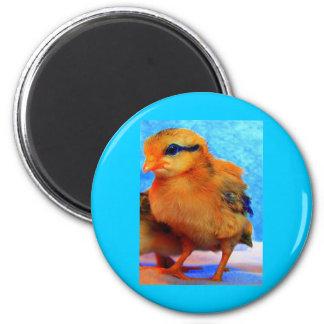 Chick-En-Dee-Ljus påsk Magnet Rund 5.7 Cm