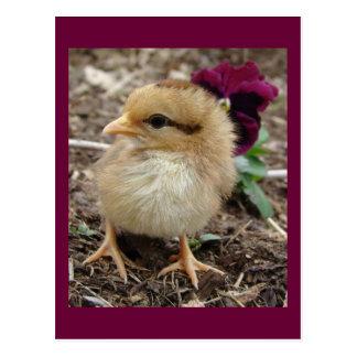 Chick-En-Dee-Ljus påsk Vykort